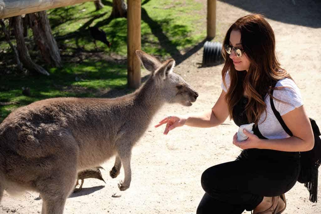 Laura feeding a Kangaroo at Moonlit Sanctuary